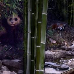Everland Resort - Panda World