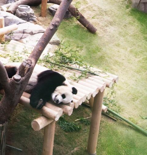 Panda-Anlage Everland
